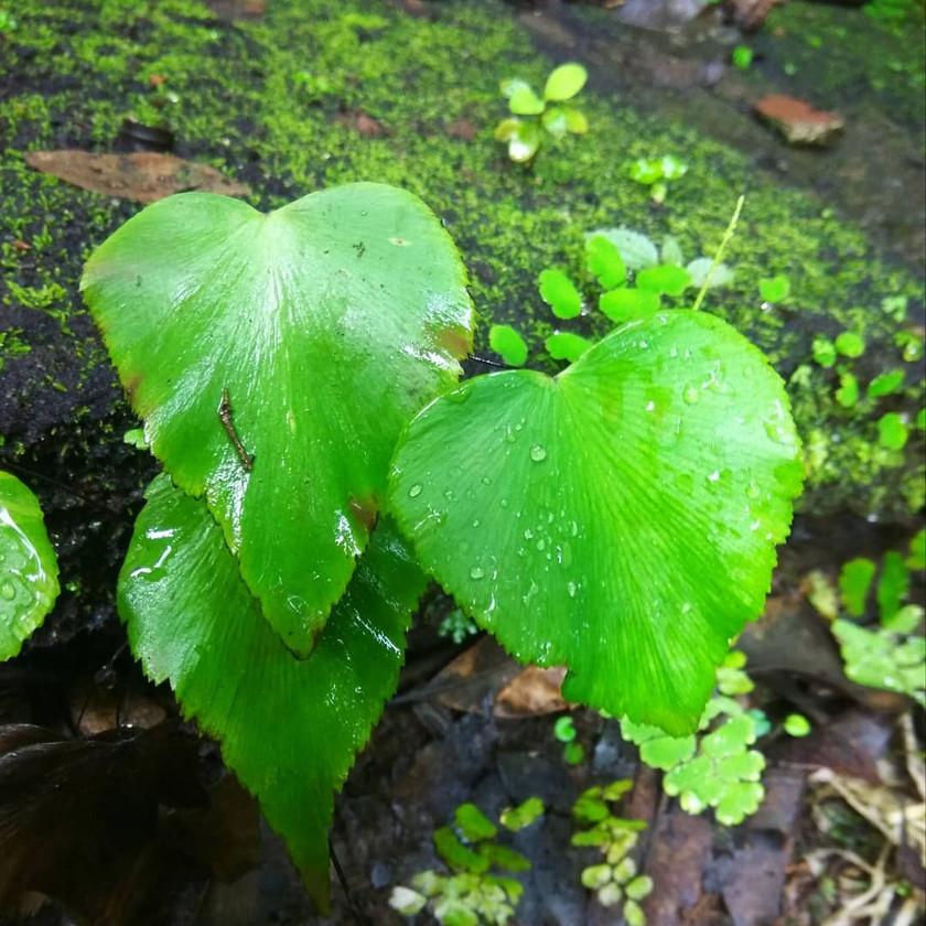 <3 heart shaped plant