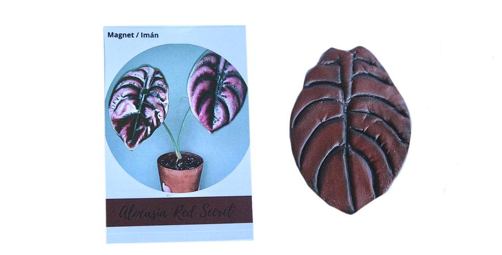 Magnet Alocasia Cuprea Copper