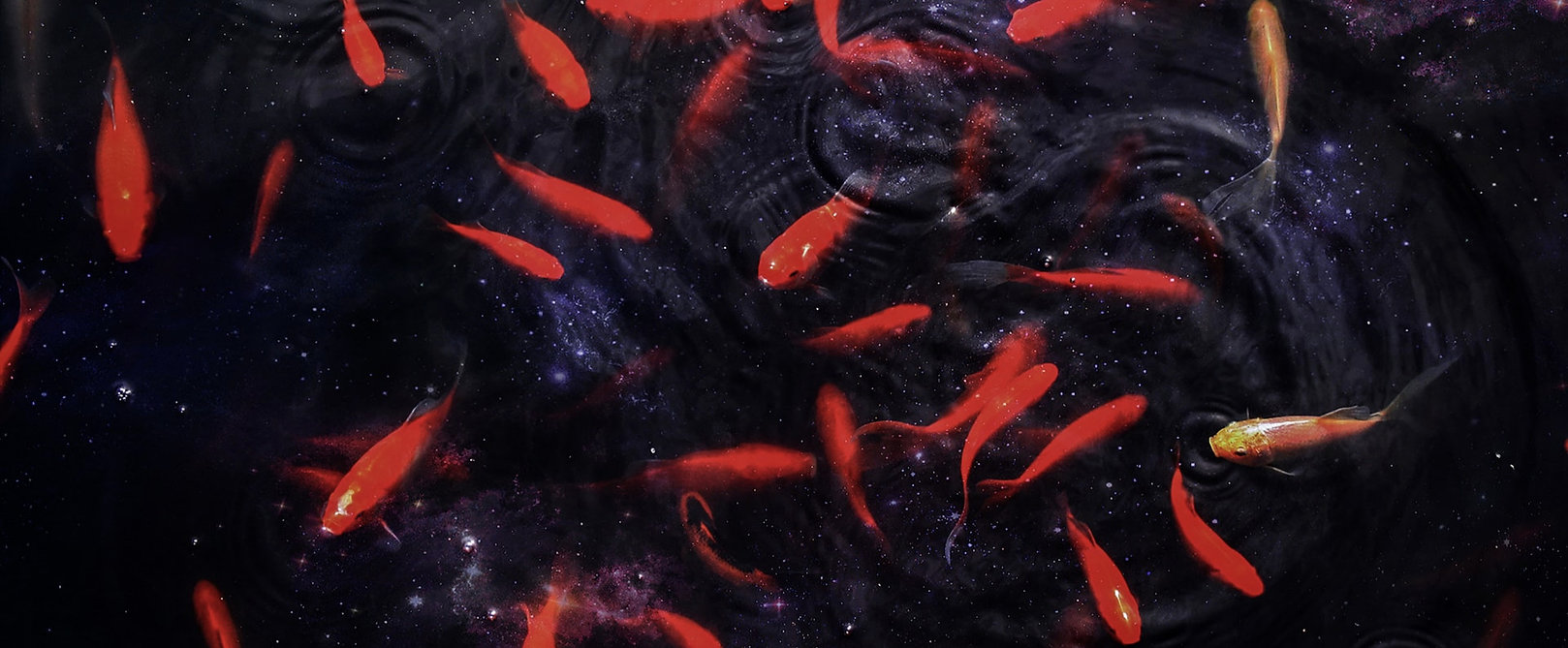 poissons rouge unsplash
