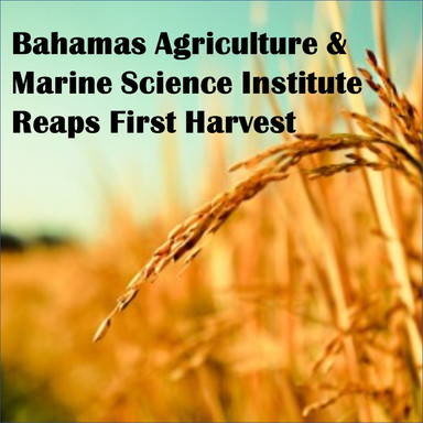 As BAMSI Reaps First Harvest, Top Student Discusses its Importance and Life after Graduation