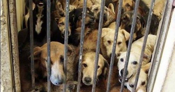 RE DI SPAGNA: VIETARE L'UCCISIONE DEGLI ANIMALI NELLE PERRERAS