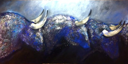 MIDNIGHT BULLS 36 X 72 .