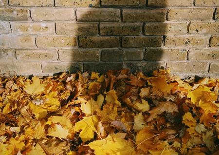 yellow-leaves-3249112.jpg