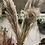 Thumbnail: Dry Pampas Grass Mace 115cm P/3