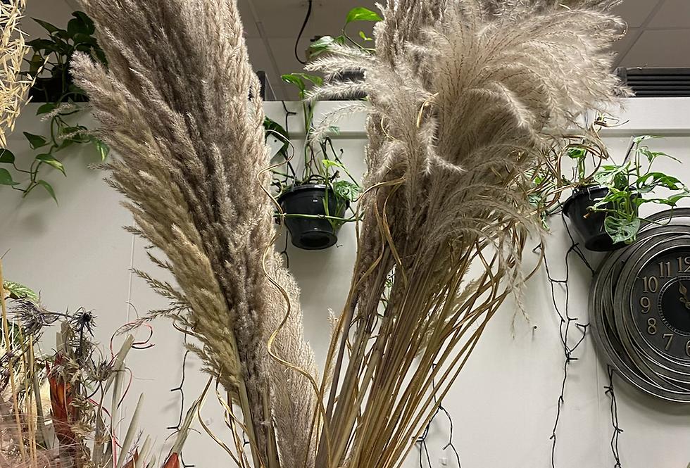 Dry Pampas Grass Mace 115cm P/3