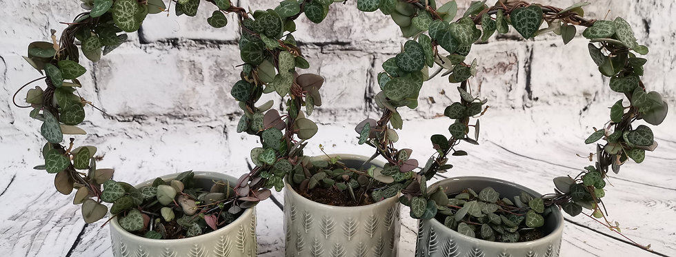 Ceropegia Woodii + ceramic leaf pot