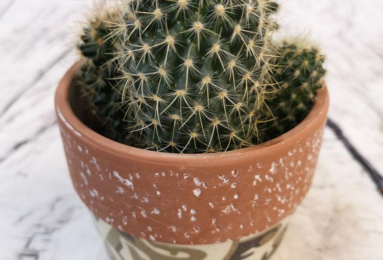 Cacti mix with ceramic 10cm pot