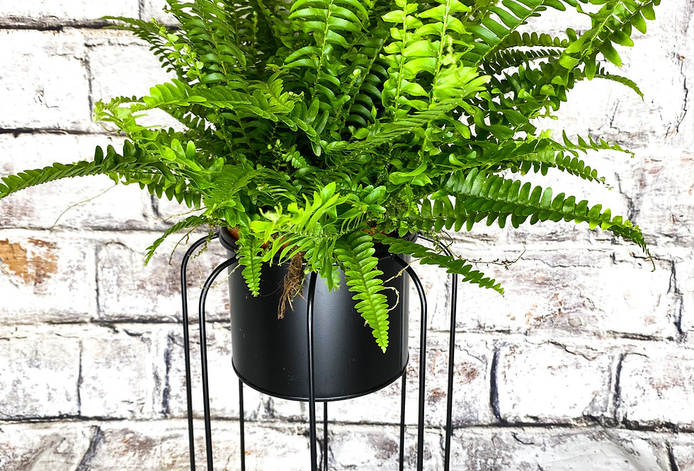 Metal plant stand d12