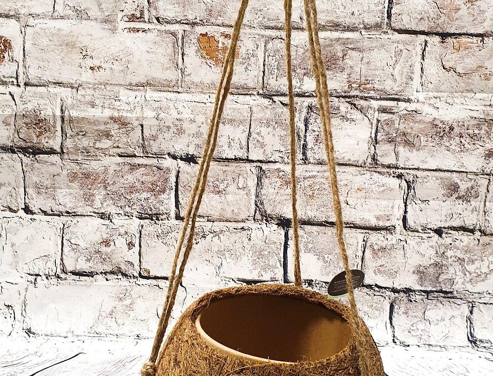 Cocodama 10cm pot