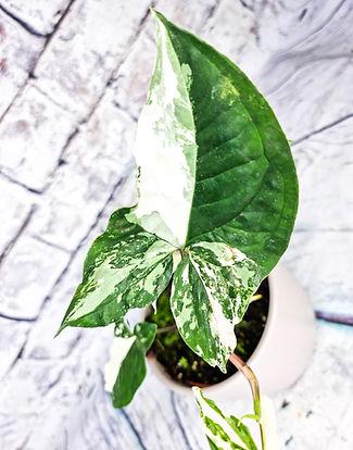 LeafyHouseshop-1331.jpg