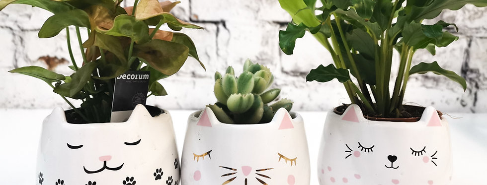 Mini cats pots