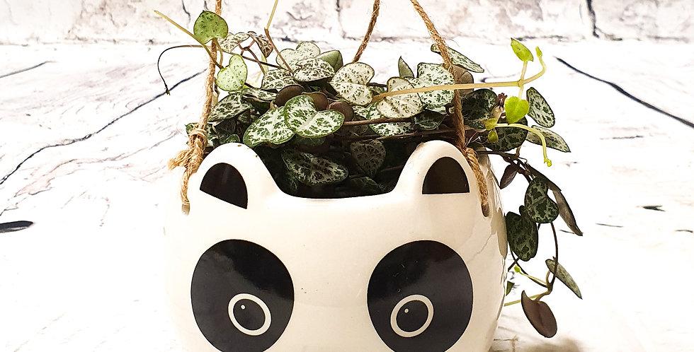 Panda - hanging ceramic pot