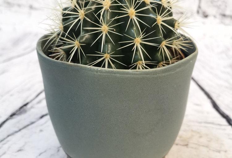 Cacti mix with ceramic 12cm pot