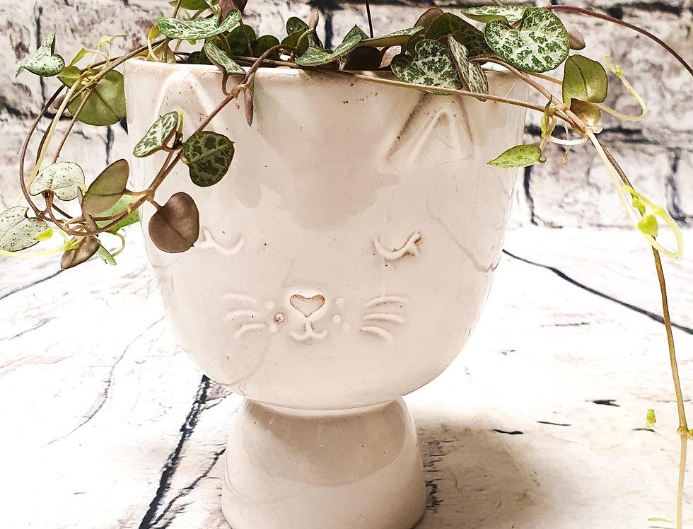 Cat ceramic pot/vase
