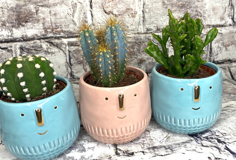 Cacti with face ceramic pot