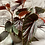 Thumbnail: Cane-stem Mallet Begonia 'Benigo'