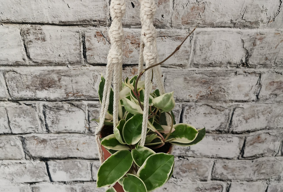 Plant hangers Macrame - hand made