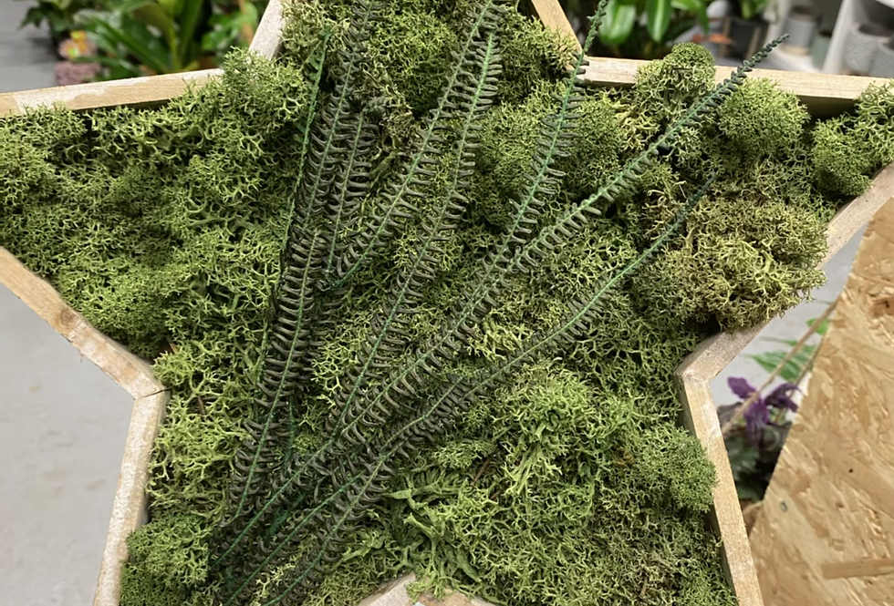 Moss star & ferns