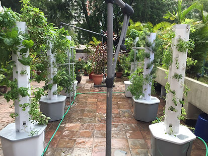 Hydroponic, Tomatoes, Basil, Vertical Garden, Urban Gardening, Hydroponic Tomatoes