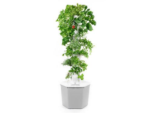 Garden Pro - ramonortiz.site