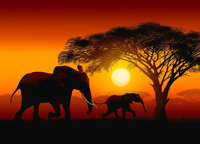 mother-and-baby-elephant-african-sunset-
