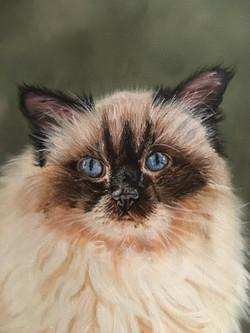Cat - Detail
