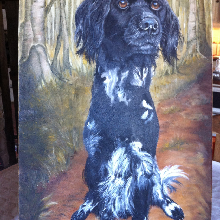 Dog Pet Portrait w.i.p.