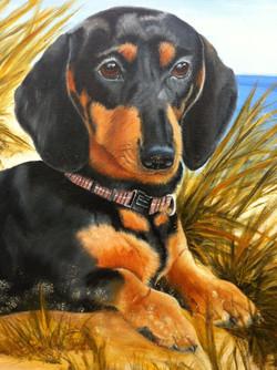 Dog Pet Portraits Detail