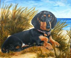 Dog Pet Portraits