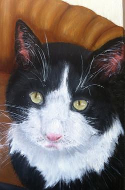 Cat Pet Portraits