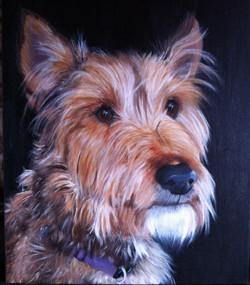 Oil Pet Portraits