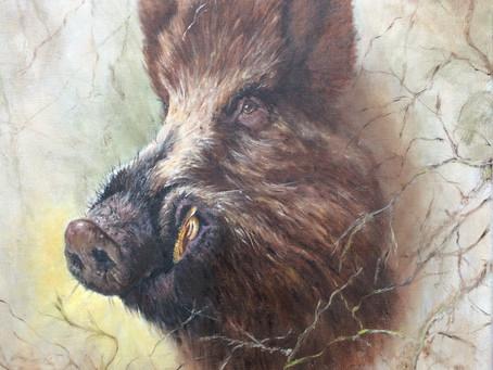 Wild Boar wandering the woods