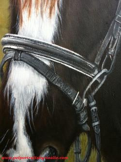 Horse Portrait in Oils detail