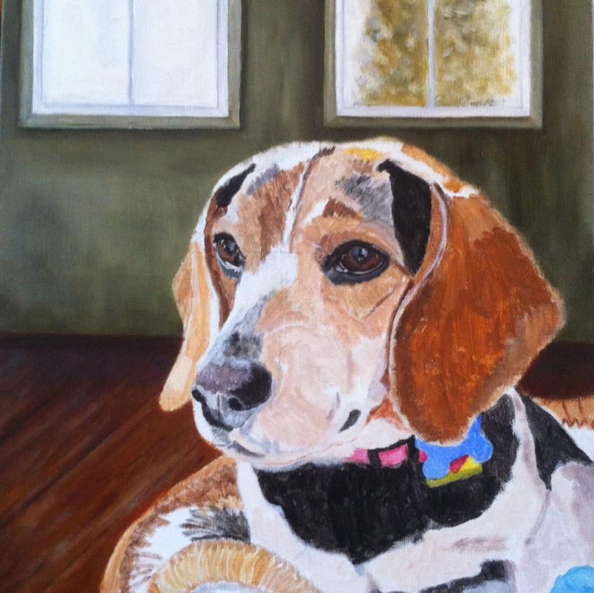 Pet Portrait in Oils