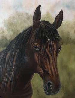 oil portrait horse