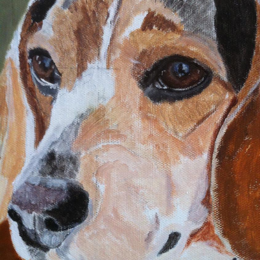 Pet Portrait in Oils detail