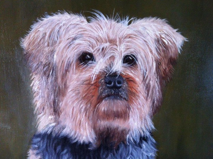 Dog Portrait Yorkshire terrier
