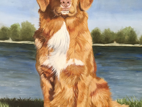 pet portrait in oils.......almost off the easel