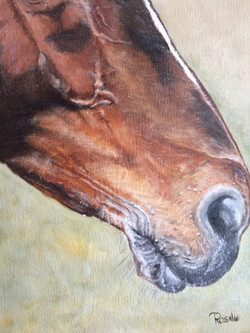 Horse oil painting close-up