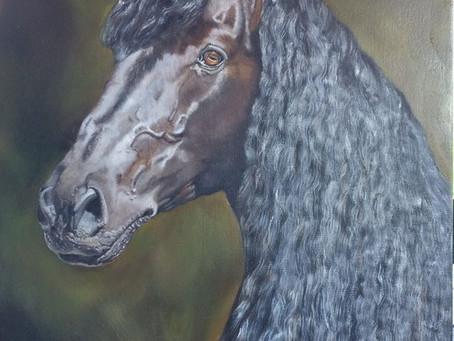 an update of the Friesian Horse