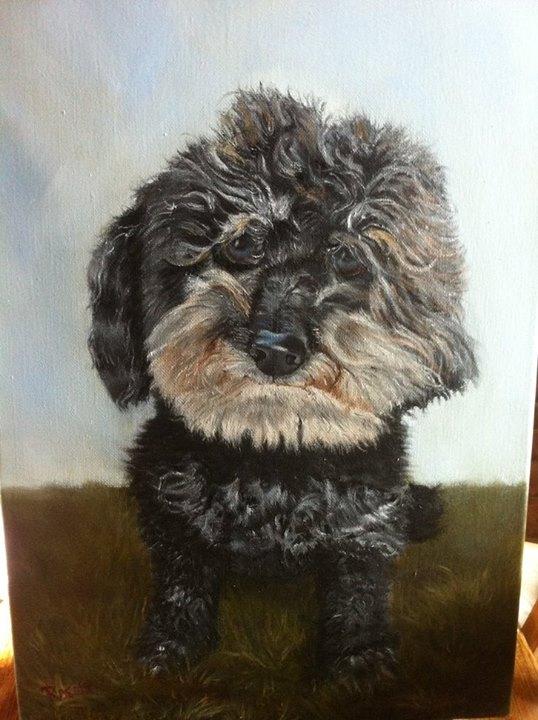 Poodle Pet Portraits