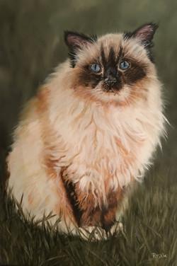 Cat - Oil Painting