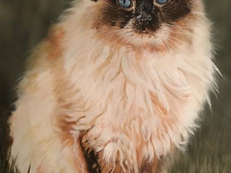 A very posh cat called Milady von Heavymarlow