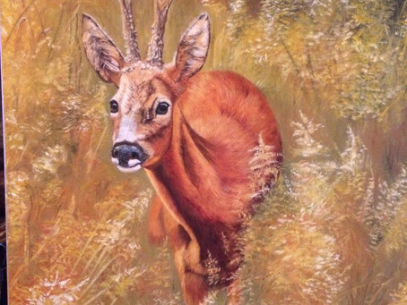 Some Wild Life oil Paintings