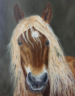 horse portrait in oils