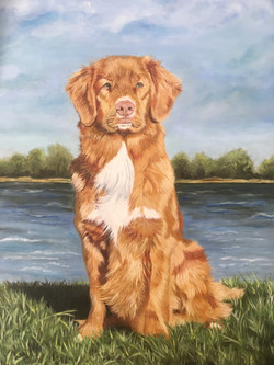Pet Portrait in oils Toller