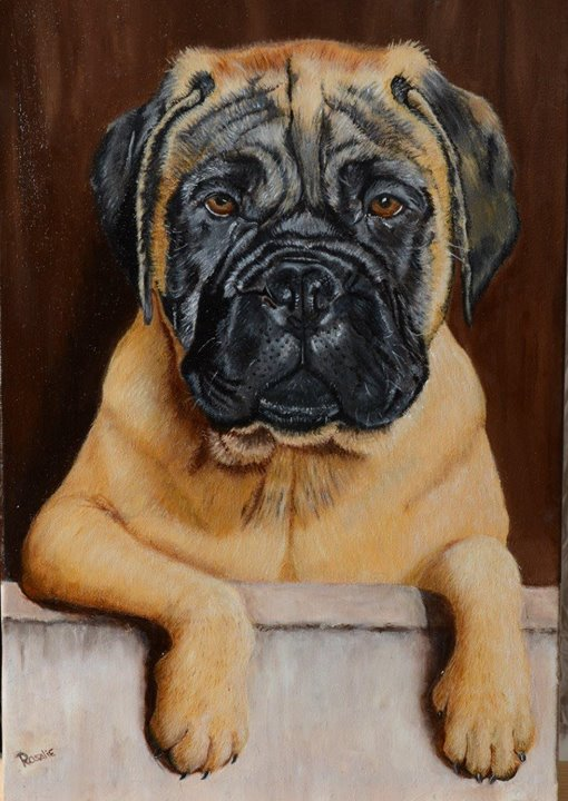 Bull Mastiff Pet Portraits
