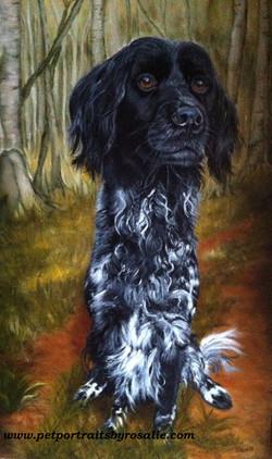 Dog Pet Portrait Oils
