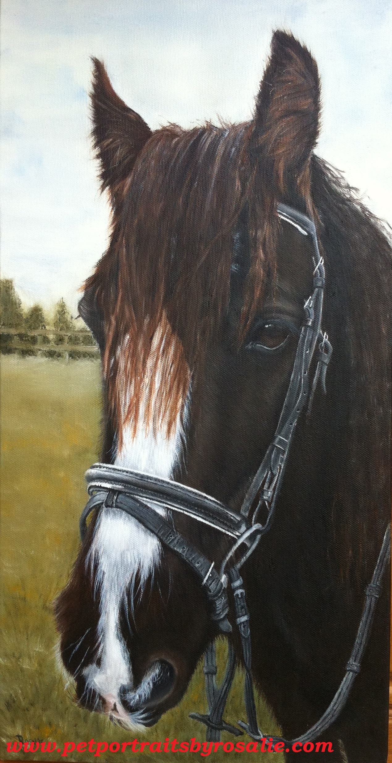Horse Portrait in Oils