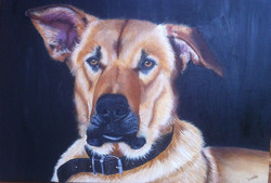 Pet Portraits In Oils
